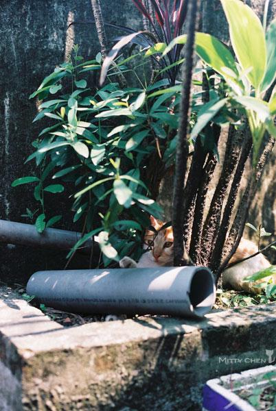 FM2-cat-064-x400.jpg