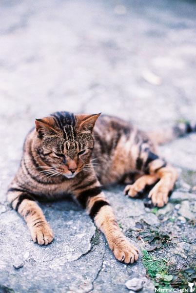 FM2-cat-070-x400.jpg