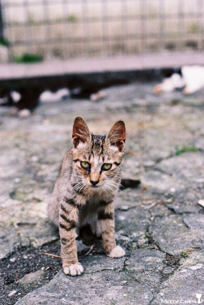FM2-cat-074-x400.jpg