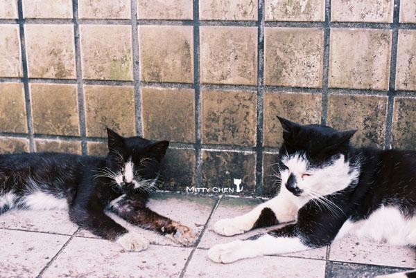 FM2-cat-075-x400.jpg