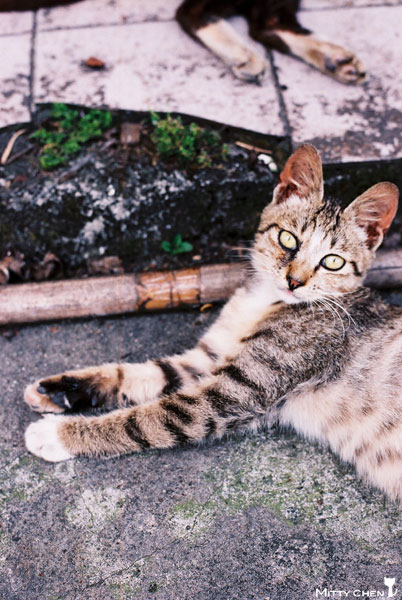 FM2-cat-077-x400.jpg