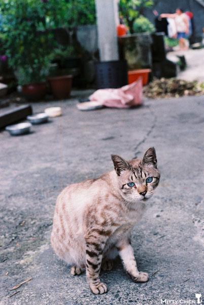 FM2-cat-080-x400.jpg