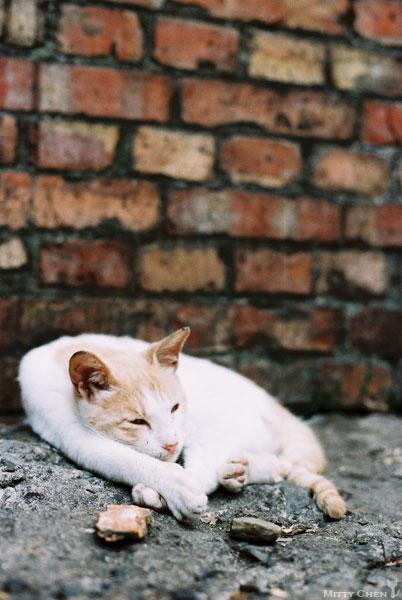 FM2-cat-085-v200.jpg