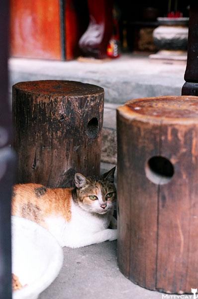 FM2-cat-084-x4.jpg
