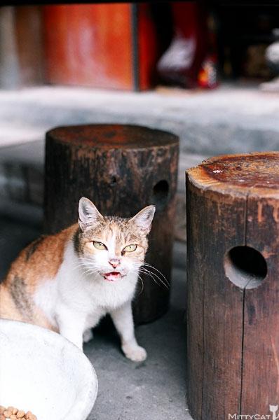 FM2-cat-085-x4.jpg