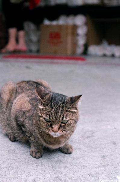 FM2-cat-088-x4.jpg