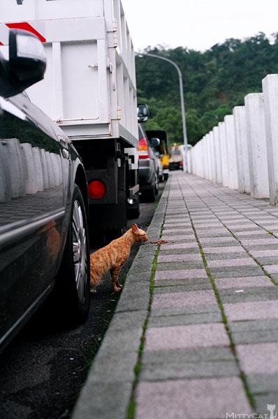 FM2-cat-089-x4.jpg