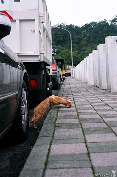 FM2-cat-090-x4.jpg