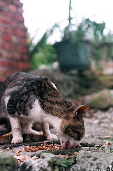 FM2-cat-092-x4.jpg