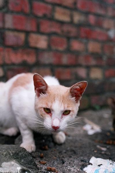 FM2-cat-094-x4.jpg