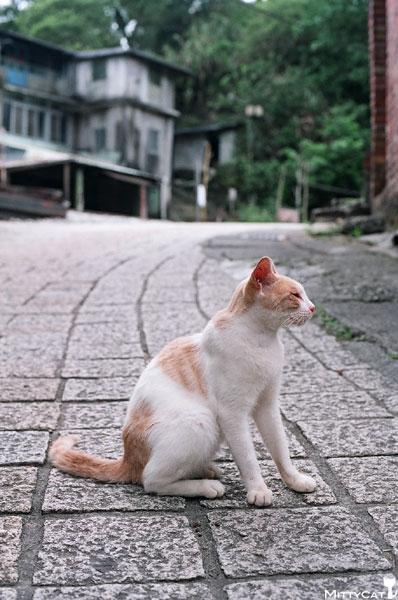 FM2-cat-096-x4.jpg