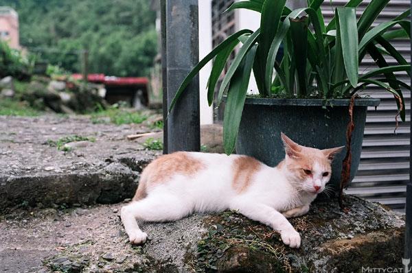 FM2-cat-098-x4.jpg