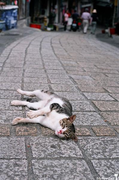 FM2-cat-099-x4.jpg