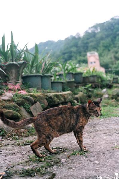 FM2-cat-100-x4.jpg
