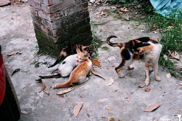 FM2-cat-113-x4.jpg