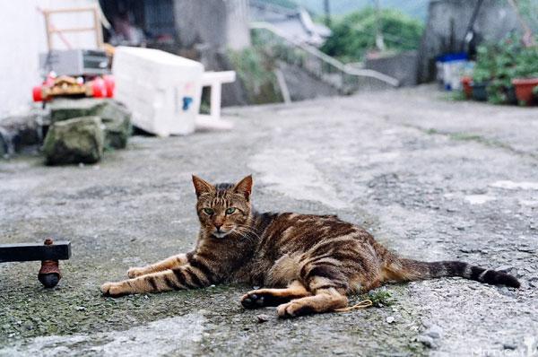 FM2-cat-118-v4.jpg