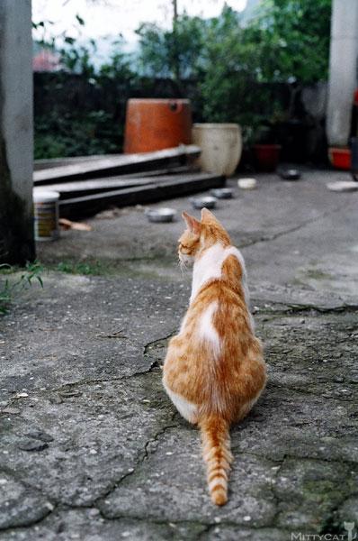 FM2-cat-119-v4.jpg