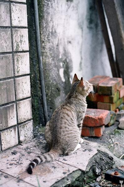 FM2-cat-126-v4.jpg
