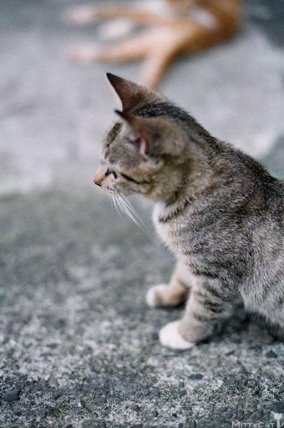 FM2-cat-127-v4.jpg