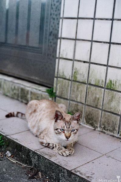 FM2-cat-128-v4.jpg