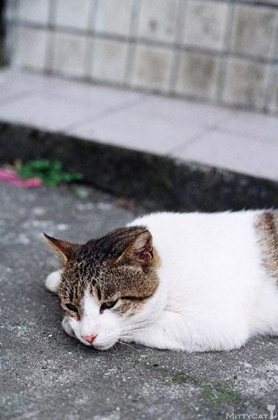 FM2-cat-129-v4.jpg