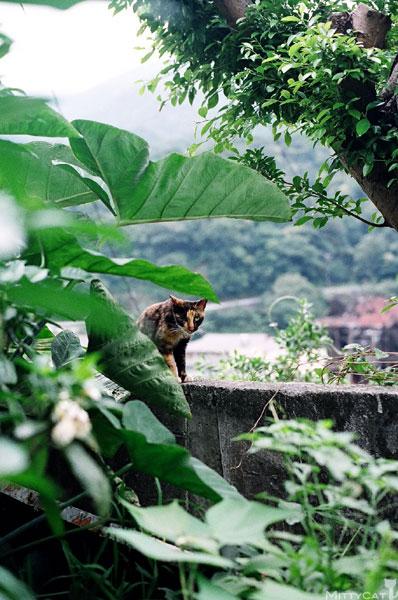 FM2-cat-131-v4.jpg