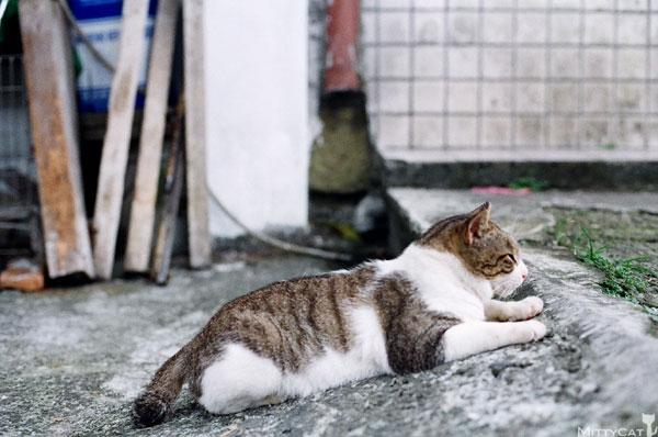 FM2-cat-134-v4.jpg