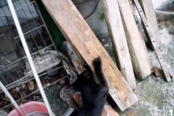 FM2-cat-136-v4.jpg