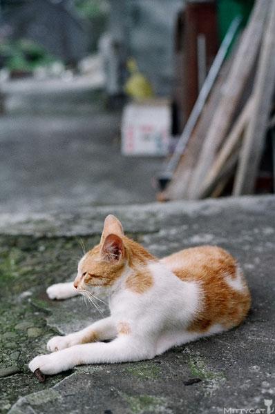 FM2-cat-137-v4.jpg