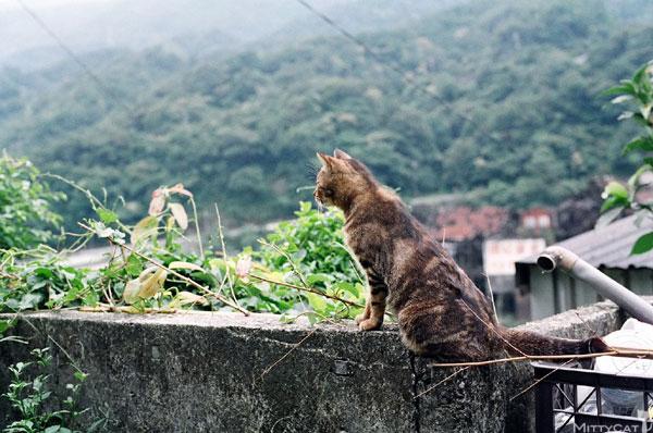 FM2-cat-141-v4.jpg