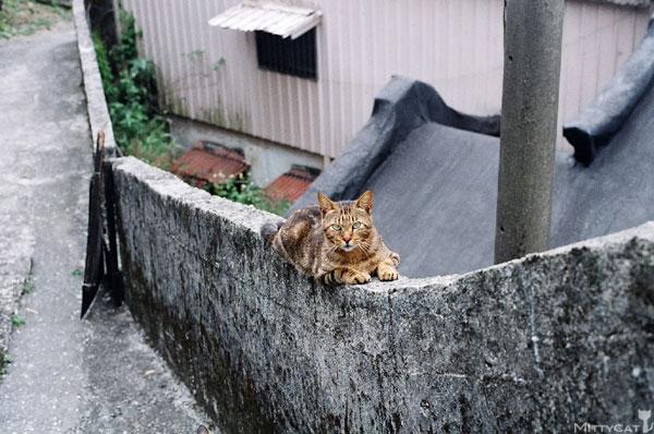 FM2-cat-142-v4.jpg