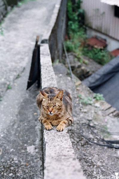 FM2-cat-143-v4.jpg