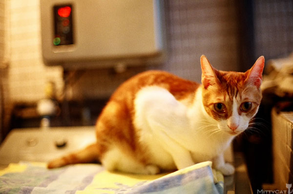 FM2-cat-145-v4.jpg