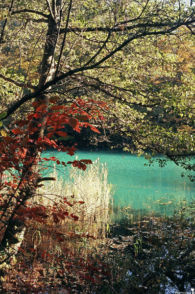 日本五色沼3.jpg
