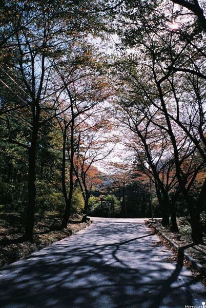 日本八景園2-c.jpg