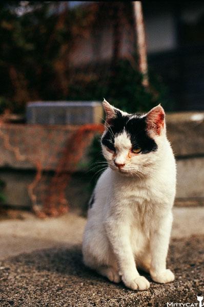 正-cat2009-01.jpg