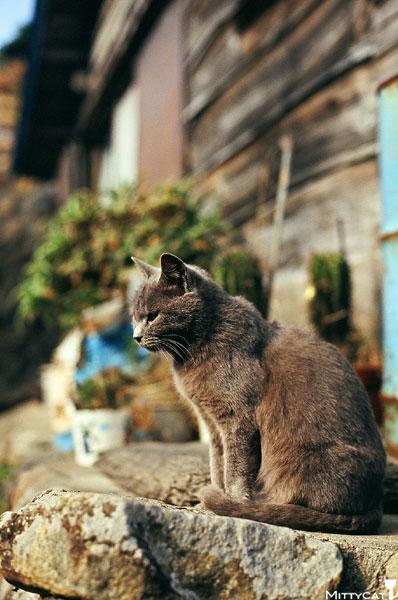 正-cat2009-02.jpg