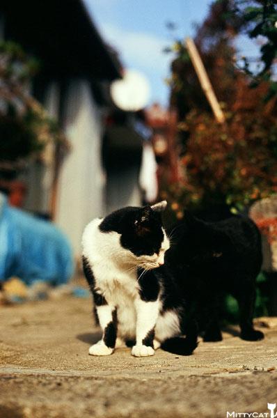 正-cat2009-03.jpg