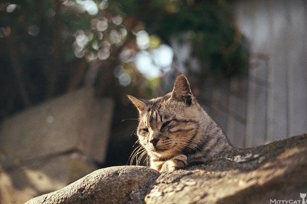 正-cat2009-05.jpg
