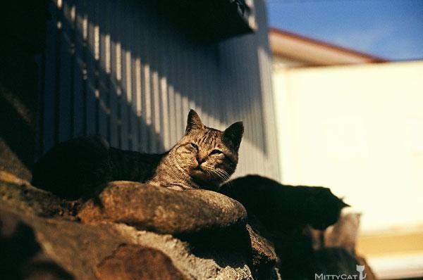正-cat2009-04.jpg