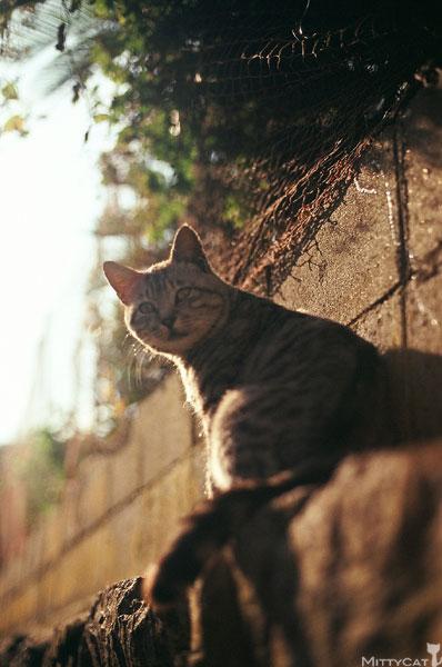 正-cat2009-07.jpg