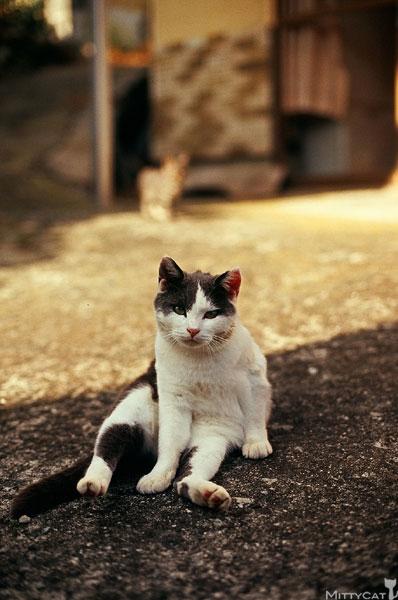 正-cat2009-06.jpg
