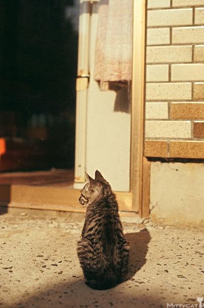正-cat2009-08.jpg