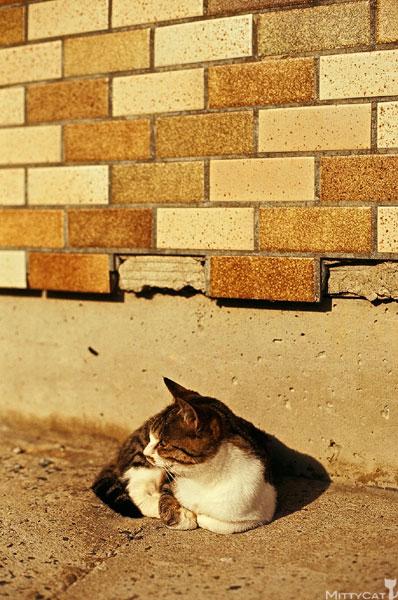 正-cat2009-09.jpg