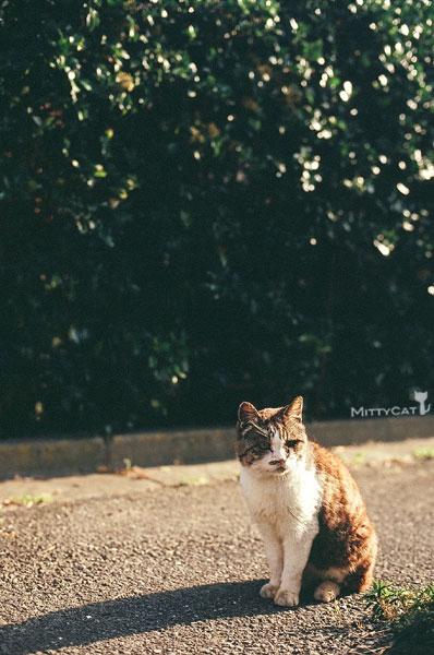 正-cat2009-10.jpg