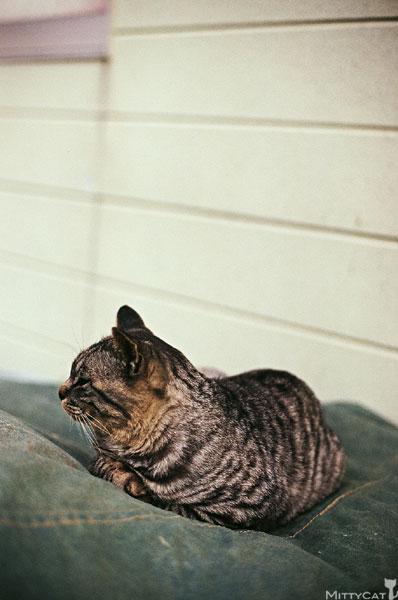 正-cat2009-12.jpg