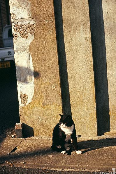 正-cat2009-13.jpg