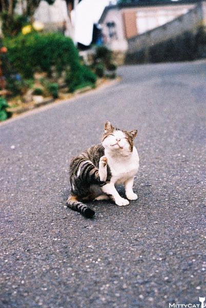 V-cat2009-01.jpg
