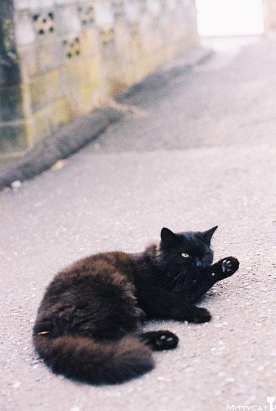 V-cat2009-02.jpg