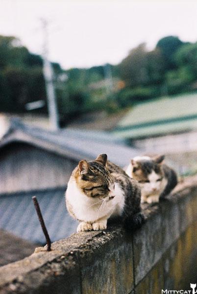 V-cat2009-03.jpg